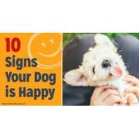 moptwo   portner medical corporation   10 signs your dog